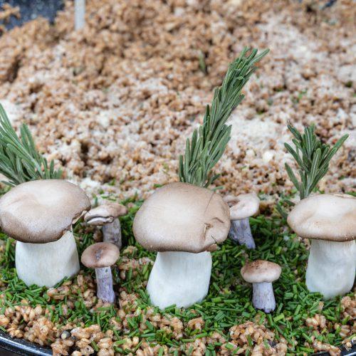 Turnips Mushroom Risotto